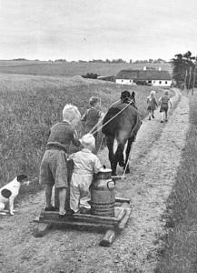 At arbejde med mælken – her Breth-firlingerne, der henter returmælk, ca. 1940